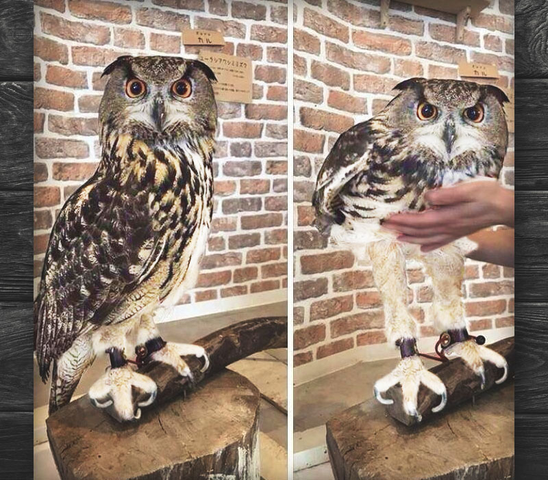 Owl with long legs