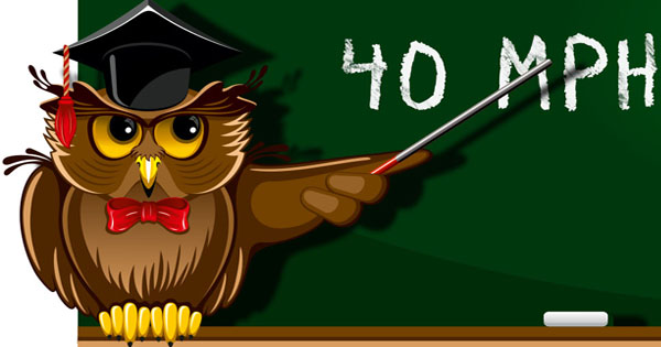 14 Fun Owl Facts For Kids - My Inner Owl