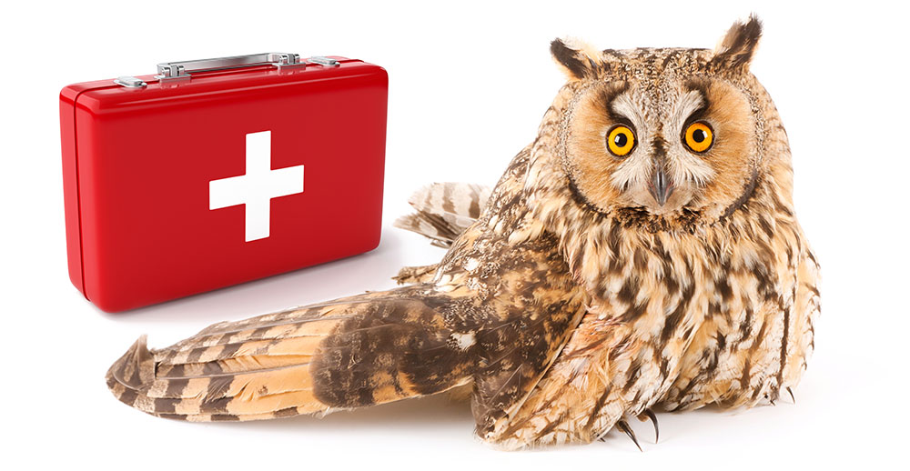 Long-eared owl with a broken wing - My Inner Owl